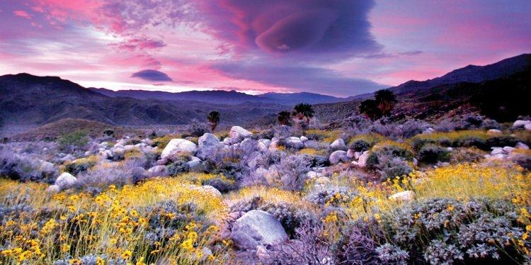 Andreas Canyon, Palm Springs, California