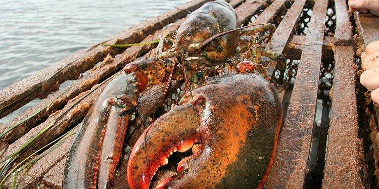 Prince Edward Island Lobster